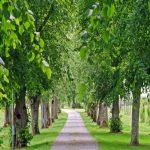 Horóscopo celta: Un árbol según tu fecha de nacimiento